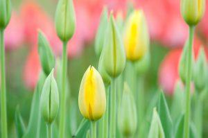 春休みは大いなる飛躍と復活のチャンス。